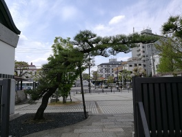Wayward pine