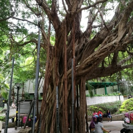 Aerial roots galore