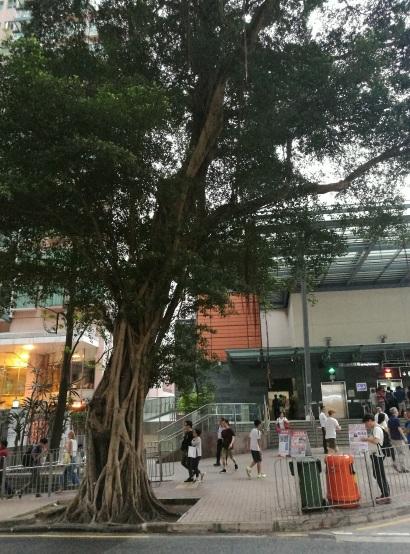 Big tree, small people