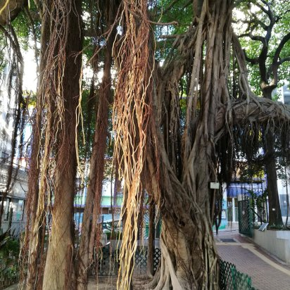 dangling roots