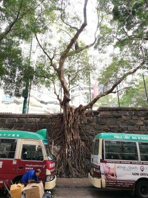 4th tree