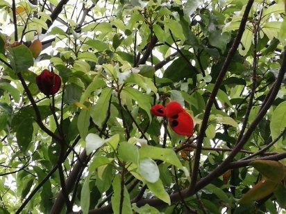 Dard beady seeds