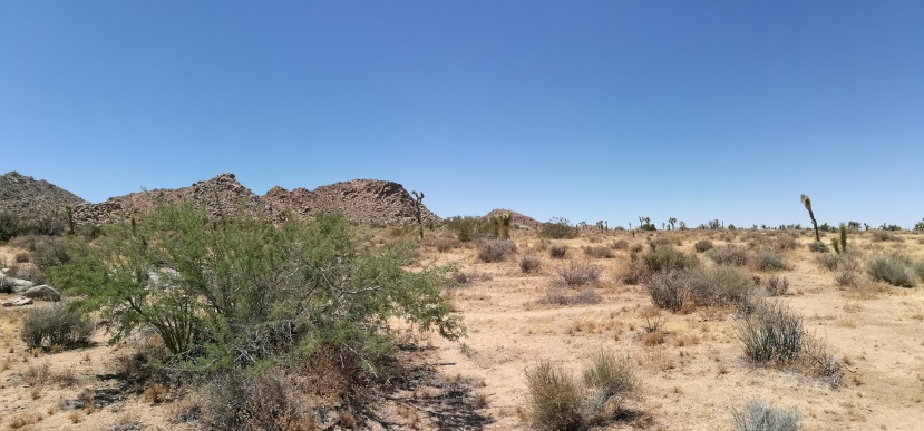 Desert landscape with what could be a Blue Palo Verde tree in the foreground