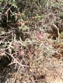 Spiky flowers